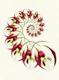 tina oloyede   rosehip syrup by aartika fractal art d8ho068